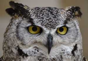 Trump Administration Slashes Spotted Owls' Habitat